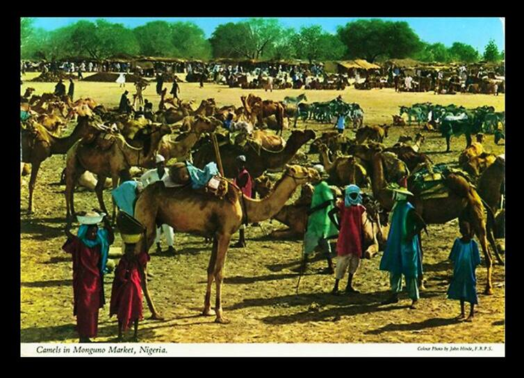Camels at Monguno Market, Maiduguri c 1960 Source_John Hinde_John Hinde collection