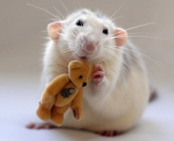 cuddle-rats-2