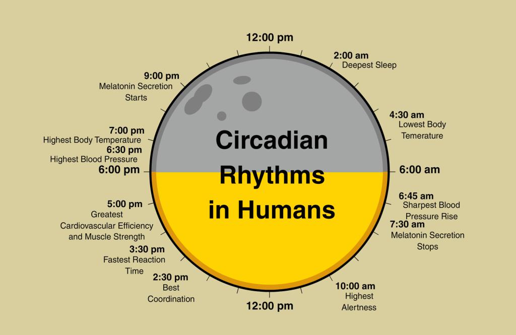 Circadian-Rythms